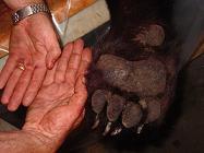 Ontario black bear hunting - Pickerel Lake Outfitters